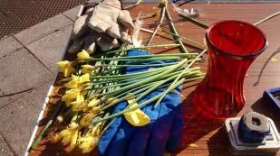 Daffodils meet liquid nitrogen...